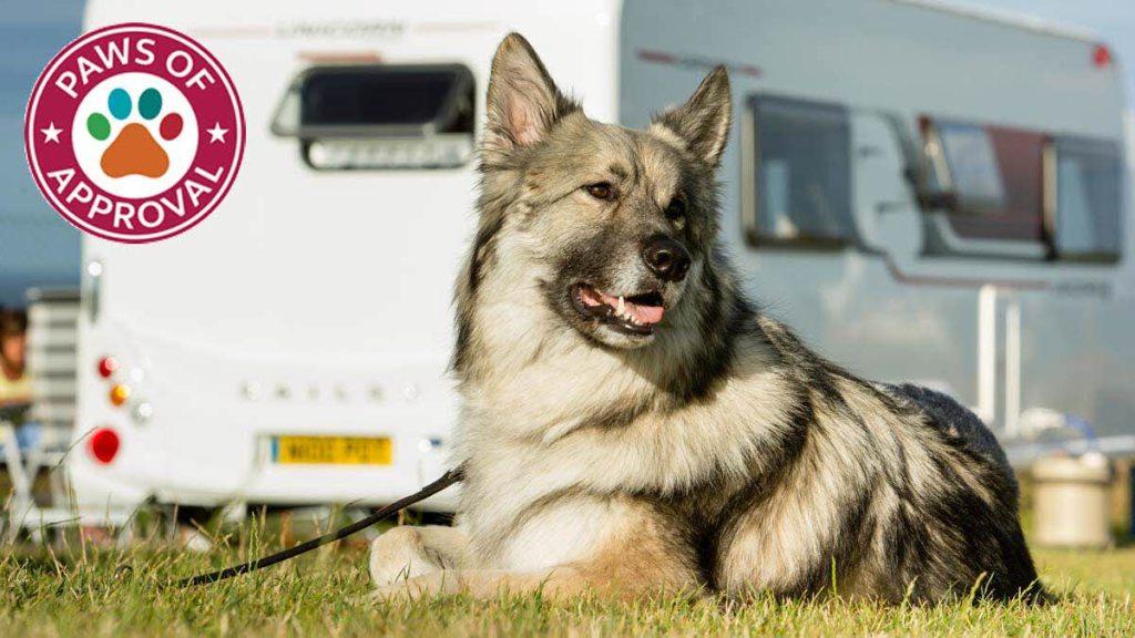dog-friendly campsites