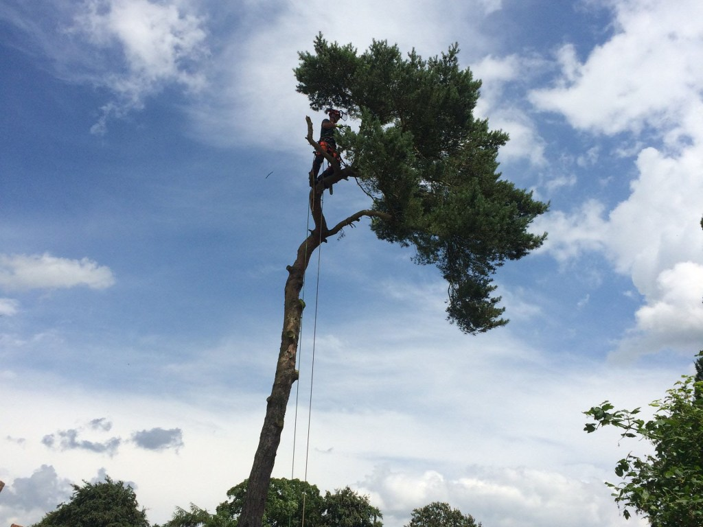 Tree surgery services