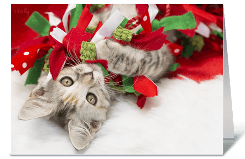 Upside Down Christmas Kitten