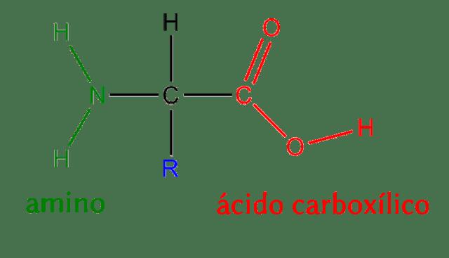 Aminoácidos Cardiacos Net