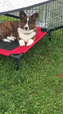 viva-dog-bed