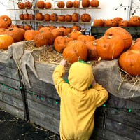 80+ family-friendly events in and around Cardiff for Halloween and half-term