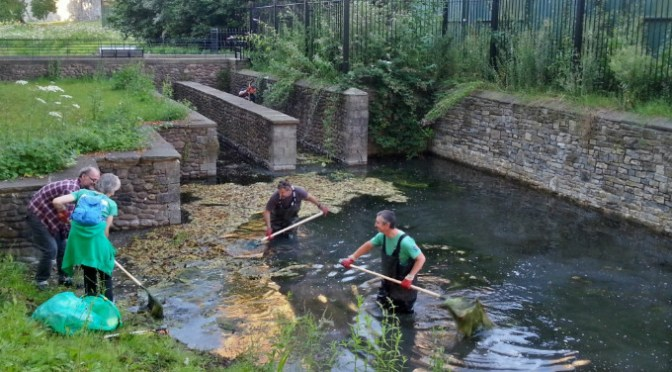 Weeding the Mill Leat at Cardiff Castle