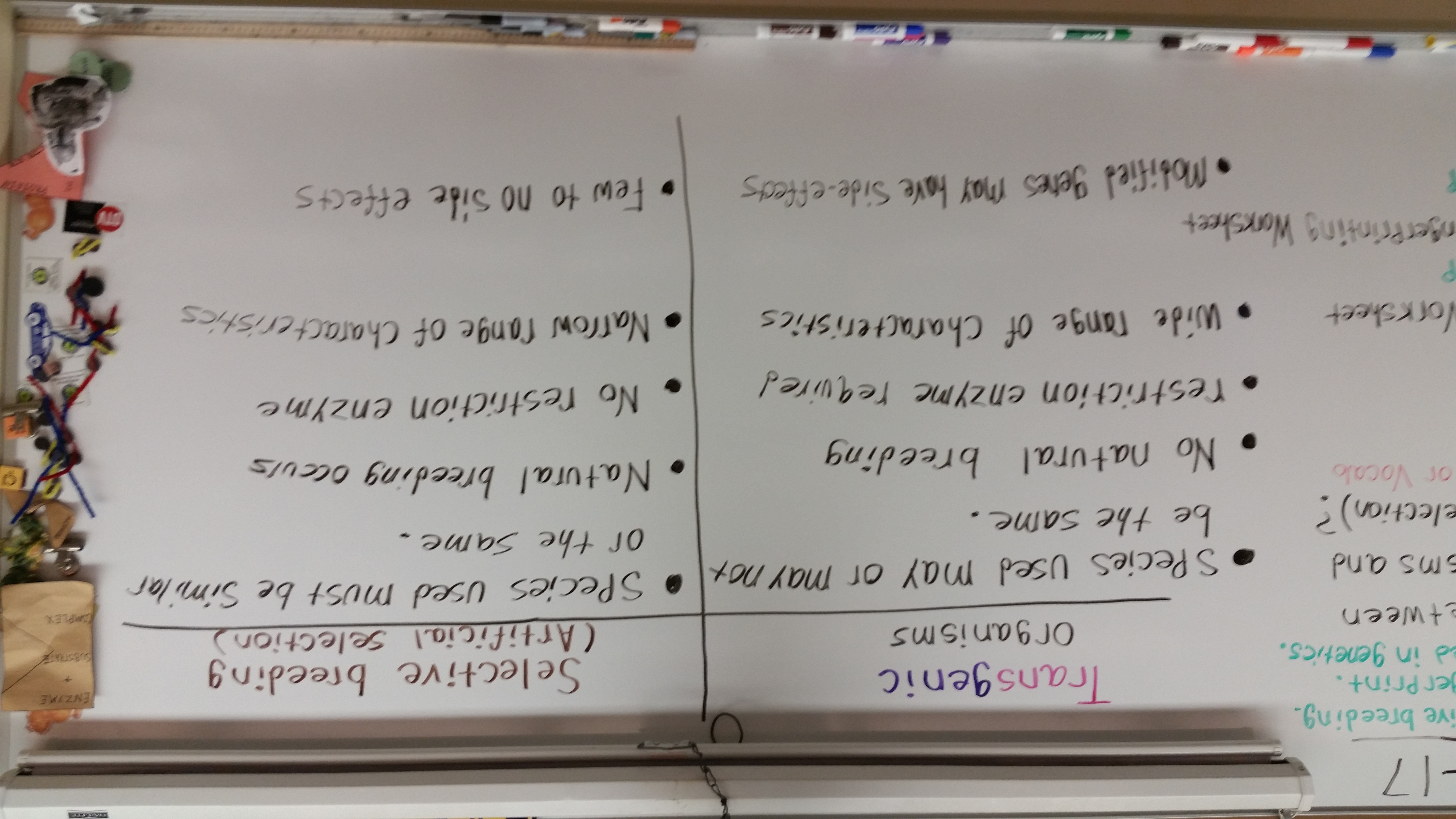 Answers With Worksheet Spongebob Genetics