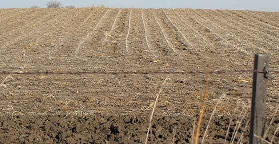 Water_Erosion_Between_Rows