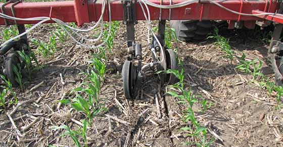 adding_fertilizer_to_Crop.2jpg