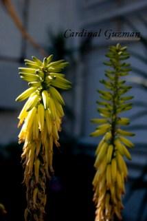 botanisk_8418