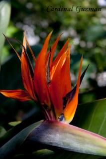 botanisk_8421