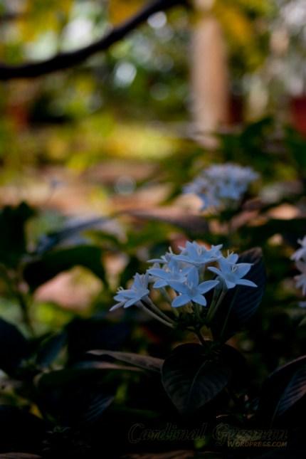 botanisk_8438