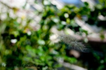 botanisk_8440