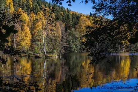 autumn_5735