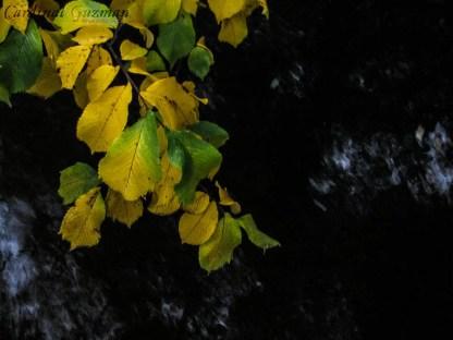 autumn_8292
