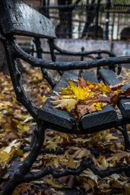 December: Resting Leaves