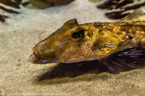 aquarium_1099