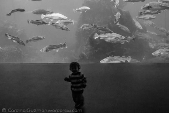 aquarium_1129