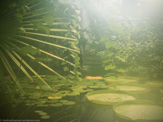 Botanical Garden / Botanisk Hage