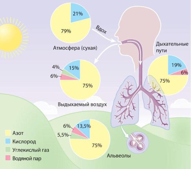 Гиперкапния и ее влияние на организм