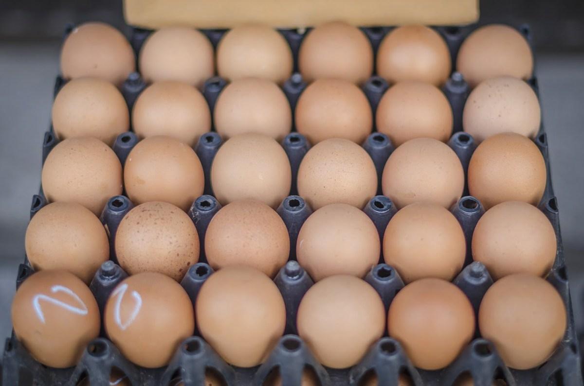 Dieta: desjejum rico em proteínas pode emagrecer