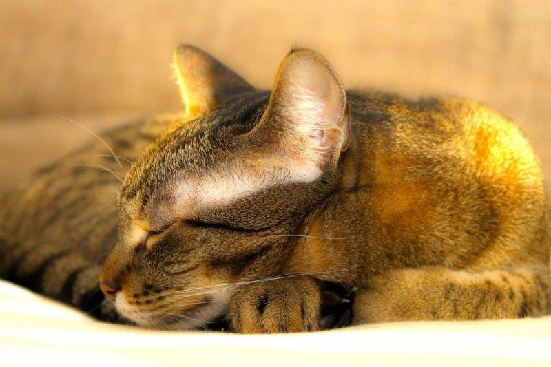 Recomendações para a duração do sono