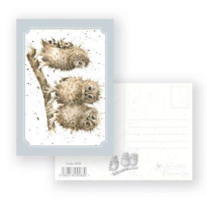 you first owl postcard