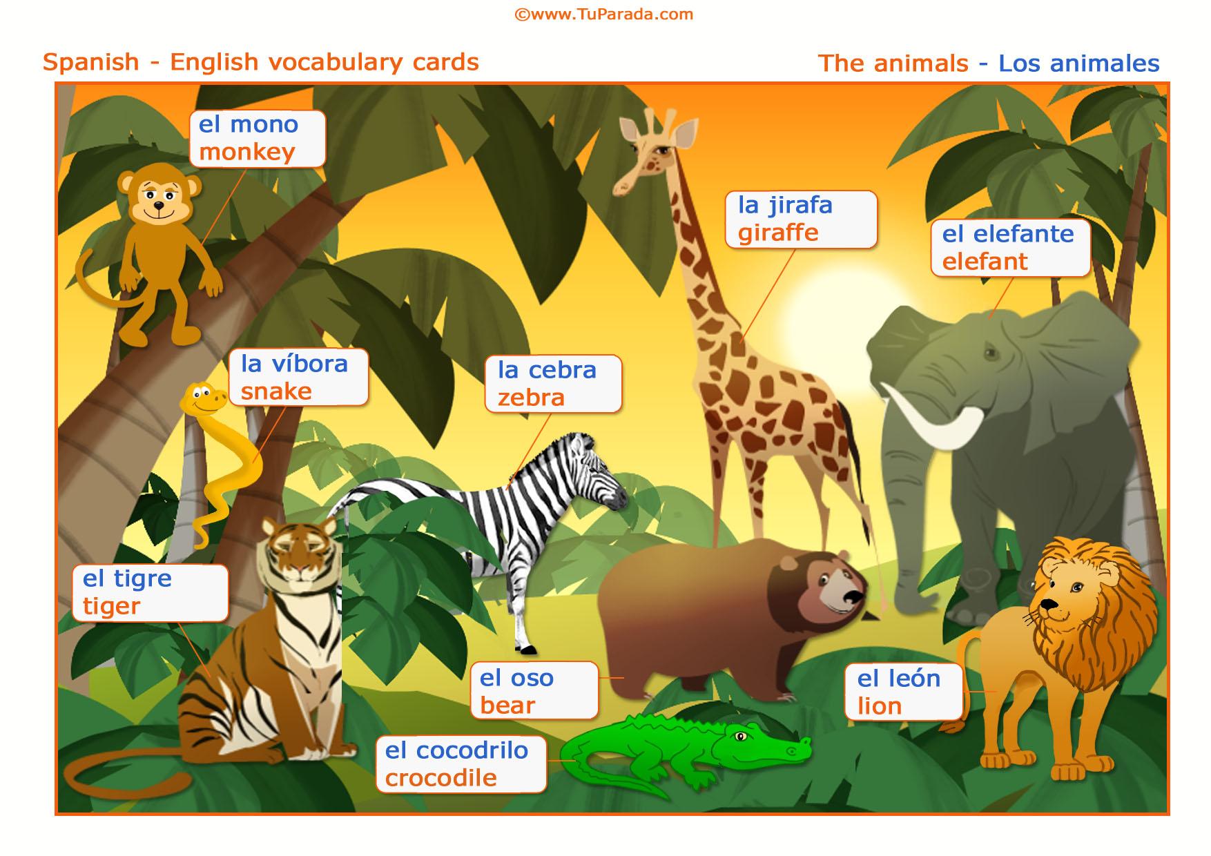 Vocabulario Animales