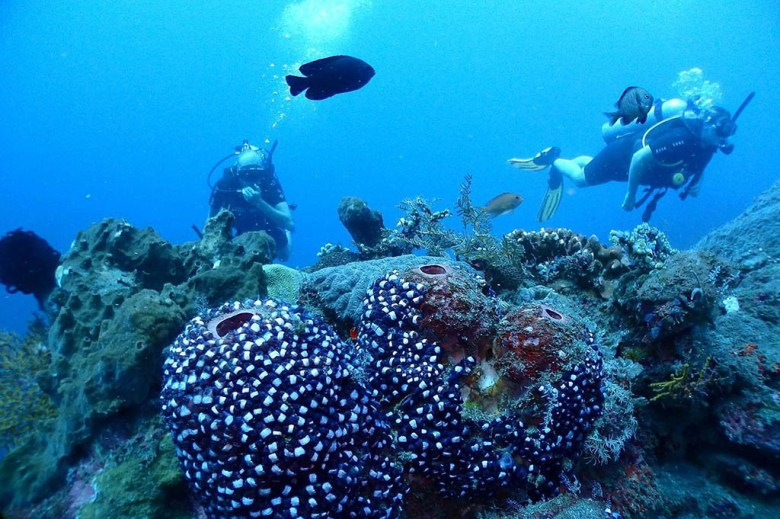 On our free dive near the Japanese shipwreck at Amed, Bali