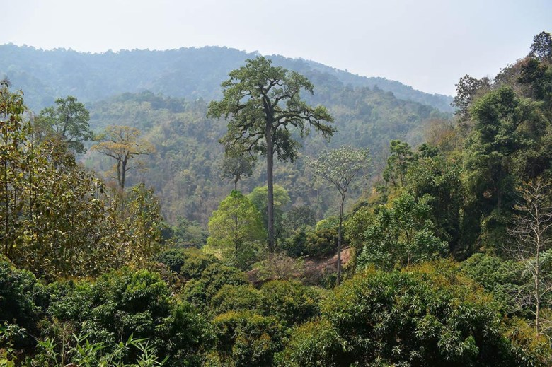 Chiang Mai trekking: scenery in the jungle