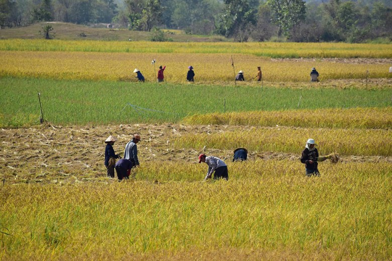 Bungva Lake farmers Savannakhet