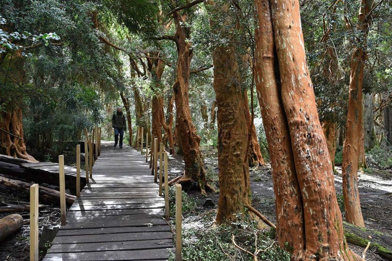 The pathways on the hiking trails around Bariloche are well marked and signposted