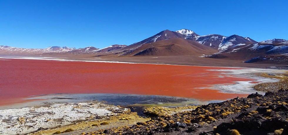 Laguna Colorada is an example of the unique topographical features to be found in south-west Bolivia