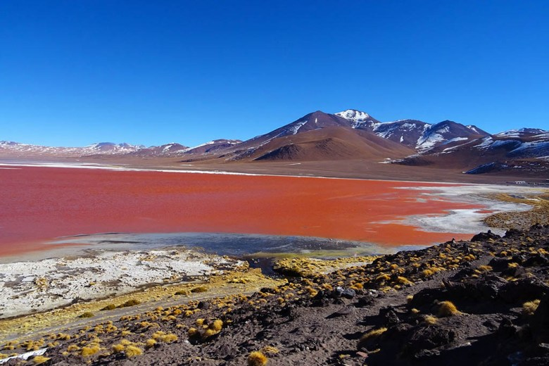 Laguna Colorada, the 'Red Lagoon', is one of many amazing sights on the Salar de Uyuni tour