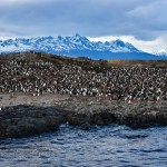 Penguins Beagle Channel Ushuaia