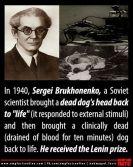 1940 dog experiments
