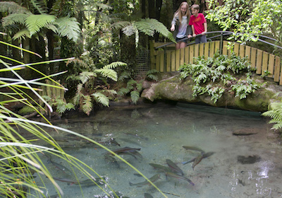 trout-pool
