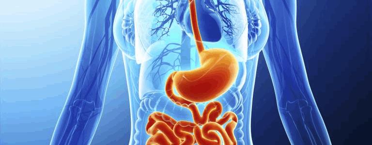 Introduction To Gastroenterologist