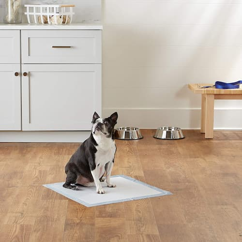 Best Dog and Puppy Pee Pads in USA 2021