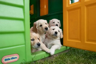 Top 5 Electronic Dog Doors with Pros and Cons