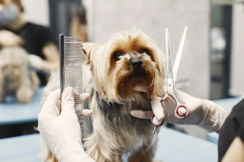 6 best dog clippers: best dog grooming clippers USA 2021
