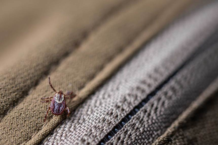 Wood tick found on my pants.
