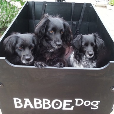 Babboe Dog – The bike for your best mate