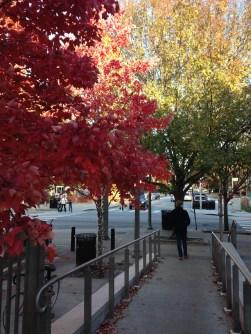 Georgia Fall, Decatur