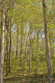 Back Roads Woods 3