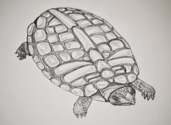 Turtle With a Secret