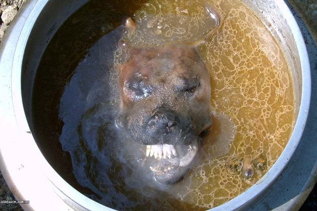 """Jamaican Chef Severely Beaten After Confessing He Sold """"Dog Soup"""" To Customers"""