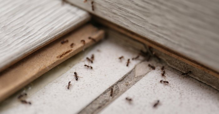 Yikes! Meet the Bugs That Live In Your House