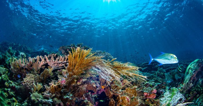 The Nature Conservancy Publishes First-Ever Detailed Maps of All Caribbean Coral Reefs