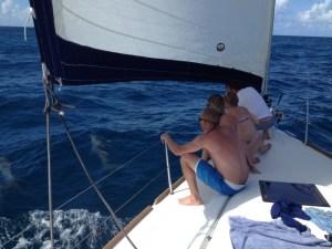 Dolphins Ahoy!