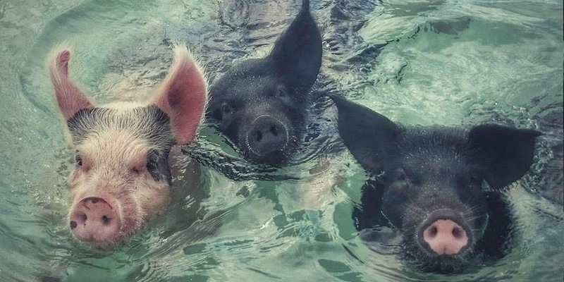Look, they're swimming!