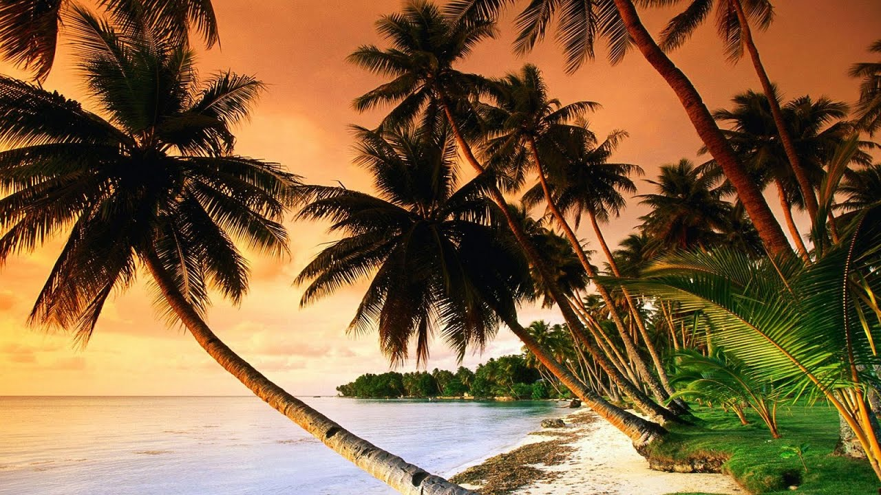 Beautiful Tropical Music & Caribbean Music & Hawaiian Music