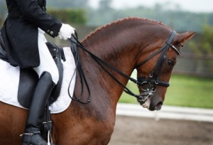 Equestrian: Lopes & Rego Compete In Florida